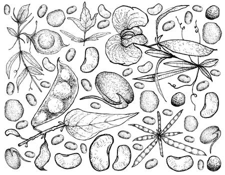 Vegetable, Illustration Background Pattern of Hand Drawn Sketch Fresh Podded Vegetables Isolated on White. Illustration