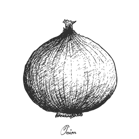 Bulb & Stem Vegetable, Illustration Hand Drawn Sketch of Fresh Whole Onion Used for Seasoning in Cooking. Isolated on White Background. Illustration