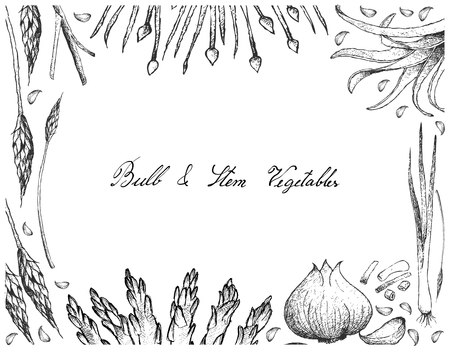Vegetable and Herb, Illustration Frame of Hand Drawn Sketch Delicious Fresh Bulb and Stem Vegetables Isolated on White Background.