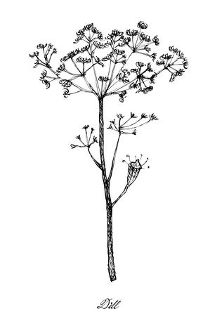 Gemüsesalat, Illustration der Hand gezeichneten Skizze köstlicher frischer Dill oder Anethum Graveolens lokalisiert auf weißem Hintergrund. Vektorgrafik