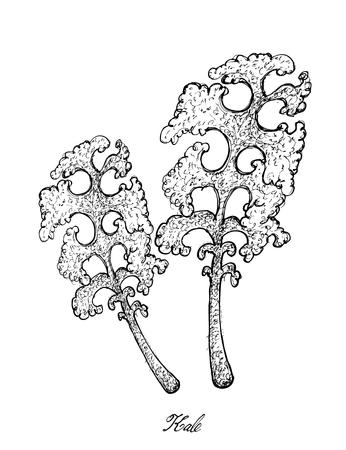 野菜サラダ、手描きスケッチおいしい新鮮なグリーンケールや葉キャベツの植物のイラストは、白い背景に隔離されています。