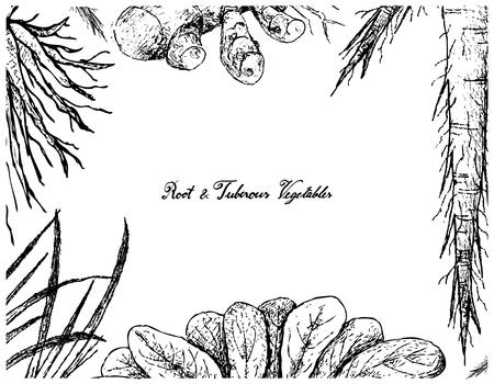 Root and Tuberous Vegetables, Illustration Frame of Hand Drawn Sketch of Turmeric, Skirret, Salsify Plants on White Background. Standard-Bild - 92577939