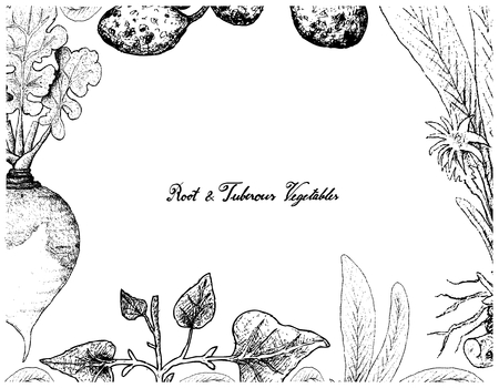 Root and Tuberous Vegetables, Illustration Frame of Hand Drawn Sketch of Turmeric, Skirret, Salsify Plants on White Background.