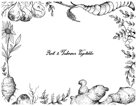 Root and Tuberous Vegetables, Illustration Hand Drawn Sketch of Pignut, Jerusalem Artichoke, Ginger and Chinese Artichoke Plants on White Background.