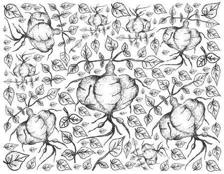 Hand Drawn Sketch of Fresh Ahipa