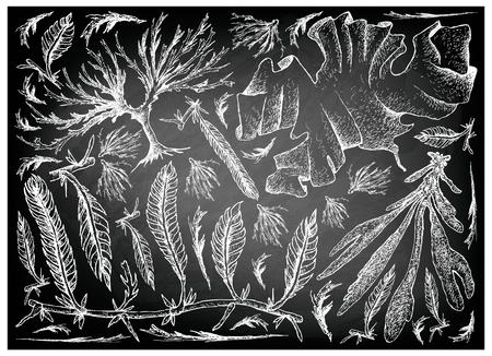 Légumes de la mer, illustration de croquis dessinés à la main, Dulse, algues Caulerpa Taxifoli, Laver et Arame sur un tableau noir. Riche en calcium, magnésium et iode.