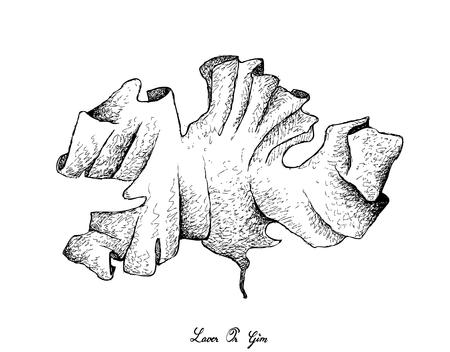 illustration vectorielle de mer de croquis dessinés à la main frais algues fraîches isolé sur fond blanc