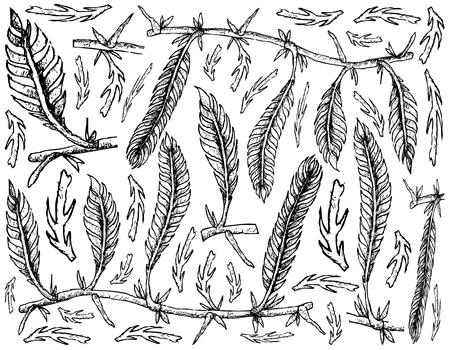 Sea Vegetables, Illustration Background of Hand Drawn Sketch Killer Algae or Caulerpa Taxifoli Seaweed. High in Calcium, Magnesium and Iodine.