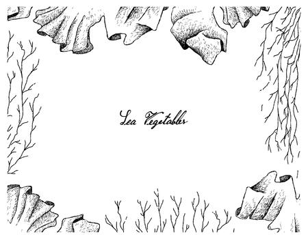 Légumes de la mer, cadre d'illustration de dessinés à la main esquisse fraîche Laver et algues de Mozuku isolé sur fond blanc. Riche en calcium, magnésium et iode.