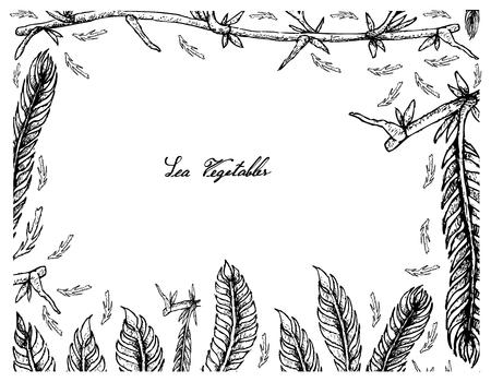 Sea vegetables, illustration frame of hand drawn sketch killer algae or caulerpa taxifoli seaweed isolated on white background. Illustration