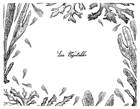 Sea vegetables, illustration frame of hand drawn sketch dulse, dillisk or palmaria palmata seaweed isolated on white background high in calcium, magnesium and iodine.