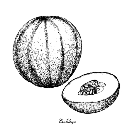 Fruit, Illustration Hand Drawn Sketch of Cantaloupe, Muskmelon, Mushmelon, Rockmelon, Sweet Melon or Spanspek Isolated on White Background. Stock Vector - 94404337