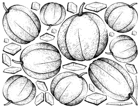 Fresh Fruit, Illustration Background of Hand Drawn Sketch of Muskmelon, Cantaloupe, Mushmelon, Rockmelon, Sweet Melon or Spanspek Fruits.