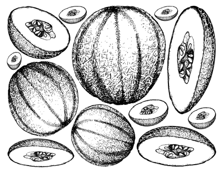 Fruit, Illustration Background of Hand Drawn Sketch of Cantaloupe, Muskmelon, Mushmelon, Rockmelon, Sweet Melon or Spanspek.