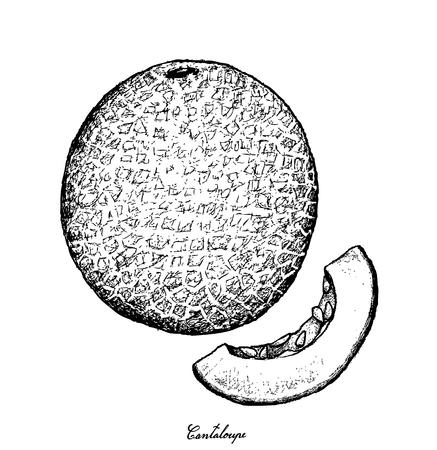 Frucht, Illustrations-Hand gezeichnete Skizze der Kantalupe, der Warzenmelone, der Mushmelon, der Rockmelon, der süßen Melone oder des Spanspek lokalisiert auf weißem Hintergrund. Standard-Bild - 94404432