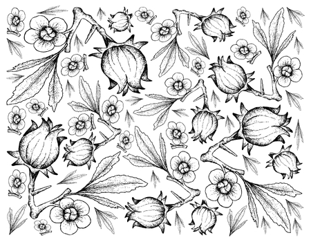Fruit, Illustration Background of Hand Drawn Sketch of Fresh Hibiscus Sabdariffa or Roselle Plant with Blossoms, Leaves and Fruits.