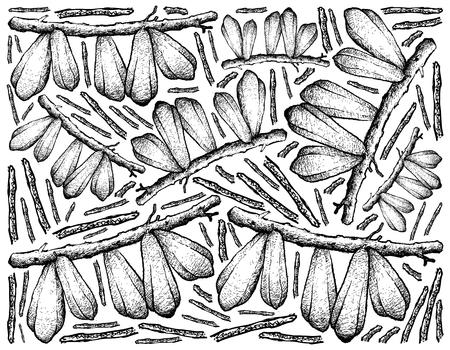 Fruit, Illustration Background of Hand Drawn Sketch of Fresh Averrhoa Bilimbi, Cucumber Tree or Tree Sorrel on The Branch. 向量圖像