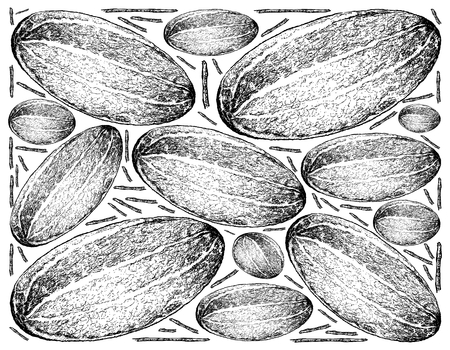 Fruit, Illustration Background of Hand Drawn Sketch of Thai Muskmelon or Thai Cantaloupe Fruit.