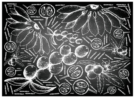 Fruit, Illustration Background of Hand Drawn Sketch of Fresh Muntingia Calabura, Camu Camu and Pisang Mas Banana on Black Chalkboard.
