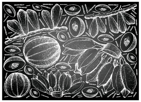 Fruit, Illustration Background of Hand Drawn Sketch of Fresh Averrhoa Bilimbi, Cantaloupe and Cultivated Bananas on Black Chalkboard. 向量圖像