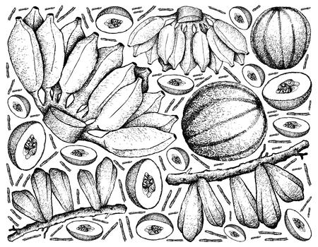 Fruit, Illustration Background of Hand Drawn Sketch of Fresh Averrhoa Bilimbi, Cantaloupe and Cultivated Bananas.