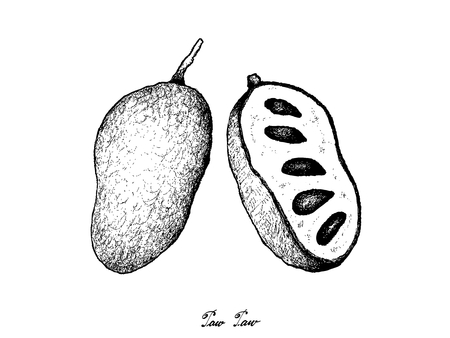 Fresh Fruits, Illustration of Hand Drawn Sketch Paw Paw or Asimina Triloba Isolated on White Background.