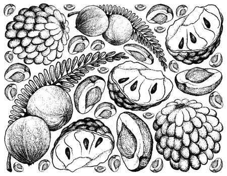 Tropical fruits, illustration of hand drawn sketch fresh Indian gooseberry and custard apple isolated on white background.