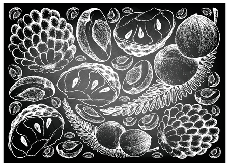 Tropical fruits, illustration background of hand drawn sketch fresh Indian gooseberry and custard apple on black chalkboard.