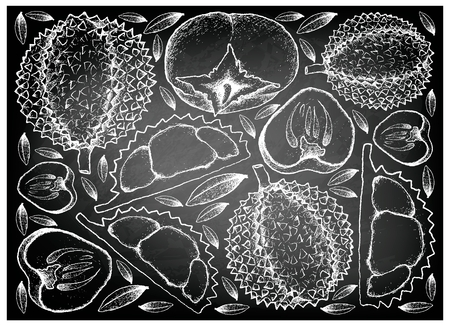 Tropical fruit, illustration background of hand drawn sketch ripe and sweet kaki or persimmon and durian on black chalkboard. Stock Illustratie