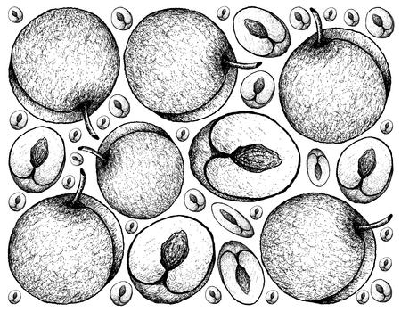 Tropical fruit, illustration wallpaper background of hand drawn sketch fresh plum fruits.