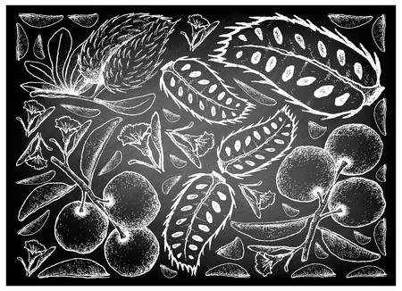 Fresh Fruits, Illustration Background of Hand Drawn Sketch Fresh Tallow Plum or Ximenia Americana and Soursop or Annona Muricata Fruits on Black Chalkboard.
