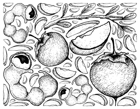 Tropical fruits, illustration background of hand drawn sketch pods of Manila tamarind and kaki or Japanese persimmon fruits.