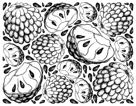 Tropical Fruit, Illustration Wallpaper Background of Hand Drawn Sketch of Custard Apple and Annona Reticulata Fruits. Illustration
