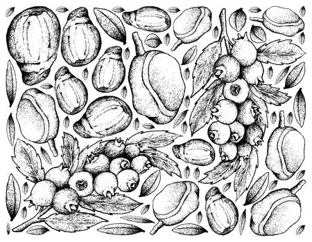 Berry Fruit, Ilustración Boceto dibujado a mano de arándanos y Mombin rojo aislado sobre fondo blanco. Rico en vitamina K, vitamina C, vitamina B y tableta de minerales, nutriente esencial para la vida.