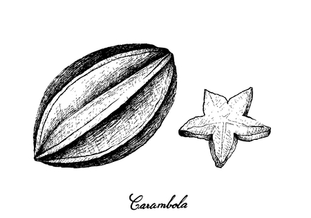 Tropical Fruits, Illustration of Hand Drawn Sketch Fresh Ripe Carambola or Starfruit Isolated on White Background. Illustration