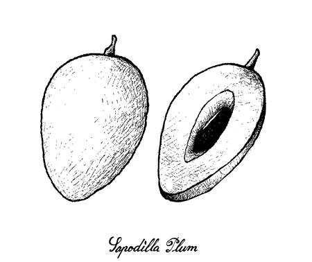 Tropical Fruits, Illustration of Hand Drawn Sketch Sapodilla Plum or Manilkara Zapota Fruits Isolated on White Background.