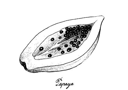 Tropical Fruits, Illustration of Hand Drawn Sketch Fresh Ripe Papaya Fruit Isolated on White Background.  イラスト・ベクター素材