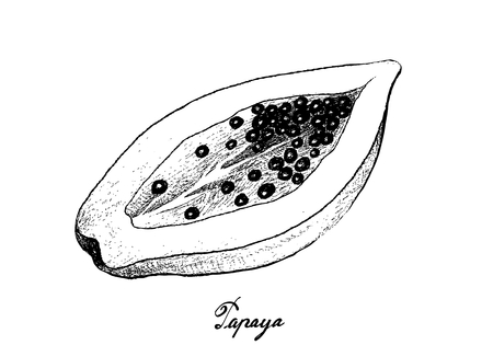 Tropical Fruits, Illustration of Hand Drawn Sketch Fresh Ripe Papaya Fruit Isolated on White Background. Vettoriali