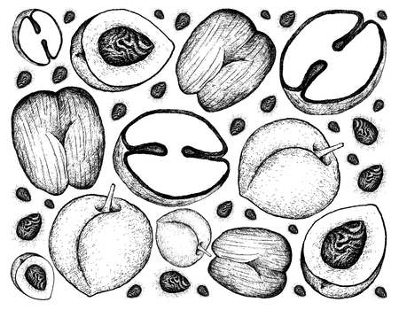 Tropical fruits, illustration wallpaper background of hand drawn sketch peach, nectarine or runus persica and coco de mer or double coconut fruits.