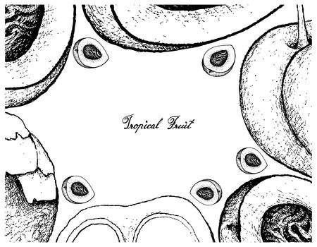 Frutas tropicales, marco de ilustración de croquis dibujado a mano melocotón y nectarina y azúcar de palma o frutos de palma de toddy. Aislado sobre fondo blanco Foto de archivo - 95890966