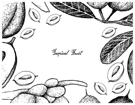 Fruits tropicaux, cadre d'illustration de croquis dessinés à la main Karanda frais ou Carissa Carandas et Coco de Mer ou fruits de noix de coco Double isolé sur fond blanc.