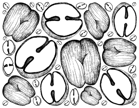 Tropical Fruits, Illustration Wallpaper Background of Hand Drawn Sketch Coco de Mer or Double Coconut Fruits.