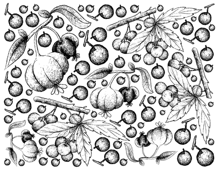 Berry fruits, illustration wallpaper background of hand drawn sketch allophylus edulis or chal-chal and pitanga, suriname cherry or Brazilian cherry fruits. Ilustração