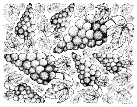 1 612 red grapes purple cliparts stock vector and royalty free red Grape VATS Fibergalss berry fruits illustration wallpaper background of hand drawn sketch bunch of fresh juicy red wine