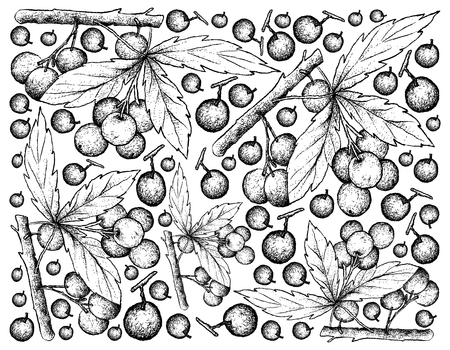 Berry fruits, illustration wallpaper background of hand drawn sketch allophylus edulis or chal-chal fruits hanging on the bunch.