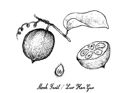 Tropical Fruits, Illustration of Hand Drawn Sketch Monk Fruit, Luo Han Guo or Siraitia Grosvenorii Isolated on White Background.