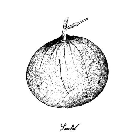 Tropical Fruits, Illustration of Hand Drawn Sketch Sandoricum Koetjape, Santol or Krathon. A Tropical Fruit in Southeast Asia Isolated on A White Background. Illustration