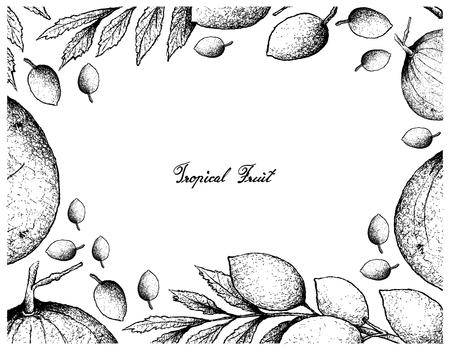 Frutas tropicales, marco de ilustración de croquis dibujado a mano Sandoricum Koetjape, Santol o Krathon y Elaeocarpus Hygrophilus Fruits. Una fruta tropical en el sudeste asiático aislada sobre un fondo blanco. Ilustración de vector