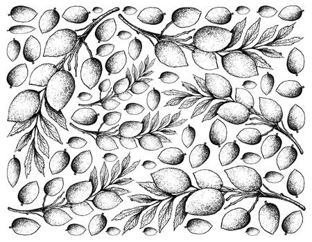 Fruta tropical, Fondo de pantalla de ilustración de bosquejo dibujado a mano de frutas frescas de Elaeocarpus Hygrophilus. Ilustración de vector