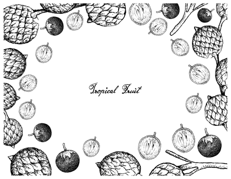 Tropical Fruits, Illustration Frame of Hand Drawn Bunch of Sketch Star Apple or Chrysophyllum Cainito and Rattan Fruits Isolated on A White Background.